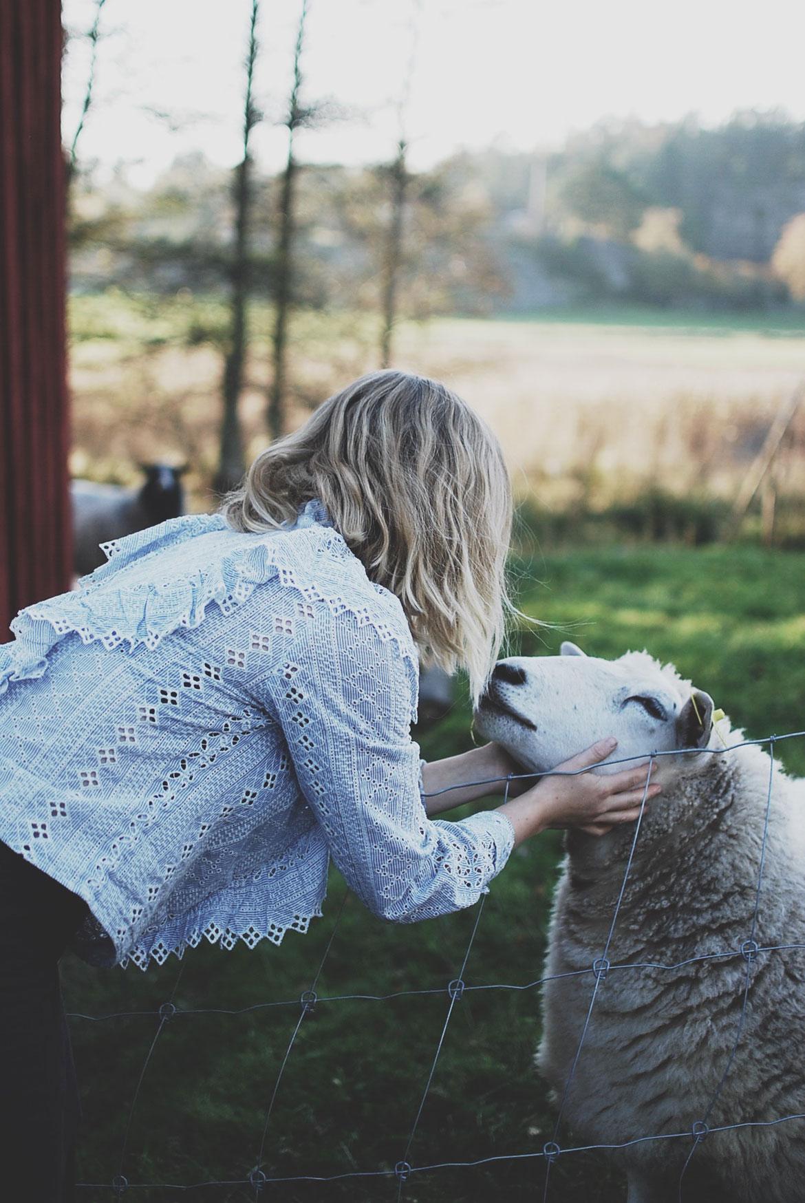 Att ta tillvara på vår ull